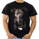 Koszulka z psem  Amstaffem