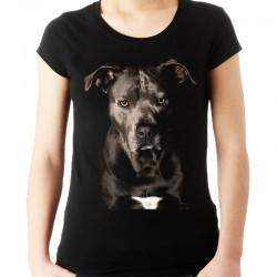 koszulka z Pitbullem