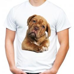 Koszulka z Collie