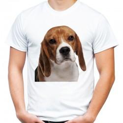 Koszulka z psem Beagle