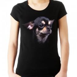 koszulka damska z psem Chihuahua