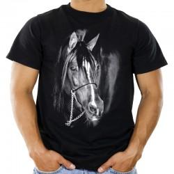 Koszulka z koniem Arabem