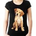 Koszulka z psem Golden retrieverem