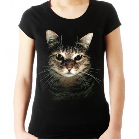 Koszulka kot