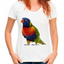 bluzka z papugą