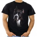 Koszulka z bulterierem