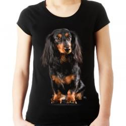 koszulka z jamnikiem długowłosym