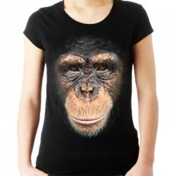 Koszulka damska z szympansem