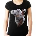 Koszulka z Misiem Koala