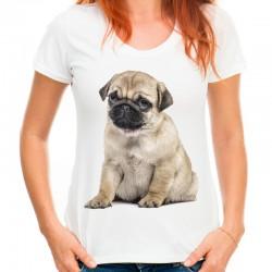 Koszulka z małym mopsem