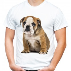 Koszulka męska z Buldogiem Angielskim
