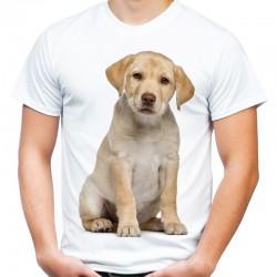 Koszulka męska z Labradorem