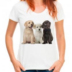 Koszulka w labradory