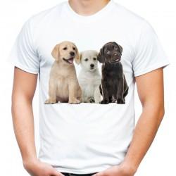 Koszulka męska w Labradory